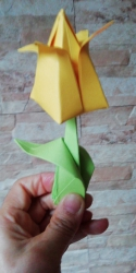tulipanes_1