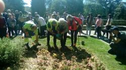 Plantación de Tulipanes 2017