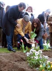 Siembra de Tulipanes 2013