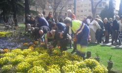 Siembra de tulipanes 2015